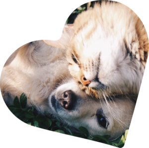 Dog and Cat in Heart